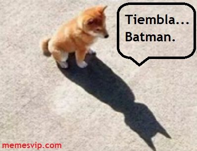 Meme Batman Dog